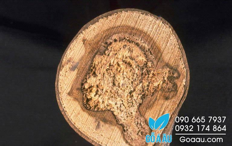 Khả năng kháng sâu của gỗ (Rot Resistance)