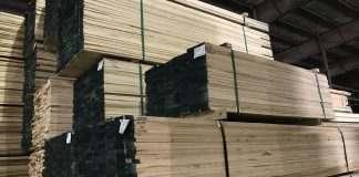 bán gỗ poplar