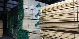 cần mua gỗ poplar