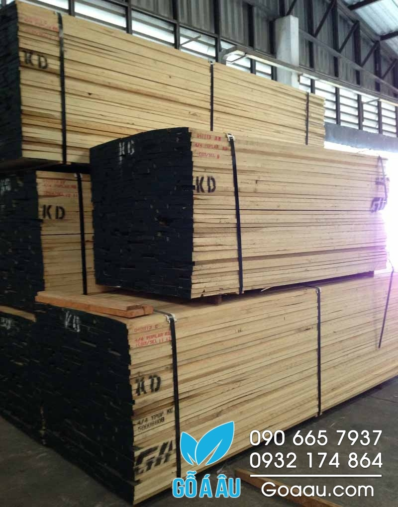 gỗ bạch dương vàng
