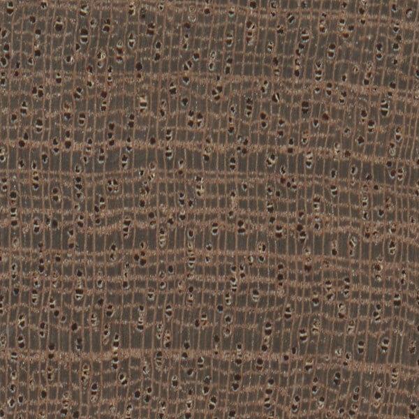 Mặt cắt ngang gỗ Xoan Đào (phóng to 10 lần)