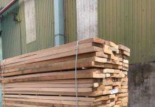 Cung cấp gỗ Beech giá tốt