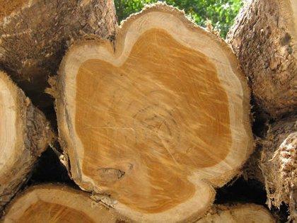 Gỗ Teak là gỗ gì